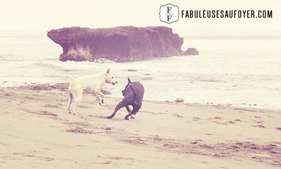 18-chien noir et blanc