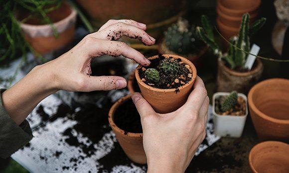 HB-article-la-perseverance-du-cactus